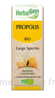 Herbalgem Propolis large spectre Solution buvable bio Fl cpte-gttes/15ml à JACOU