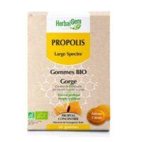 Herbalgem Propolis large spectre Gomme bio B/24 à JACOU